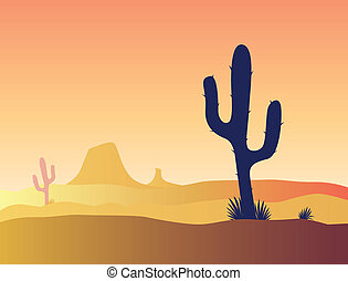 Cactus desert sunset - Scene with desert cactus plant and...