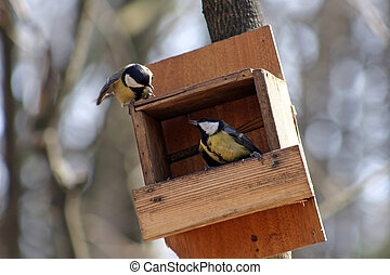 Quarrel of the titmouse - Quarrel of two titmouses