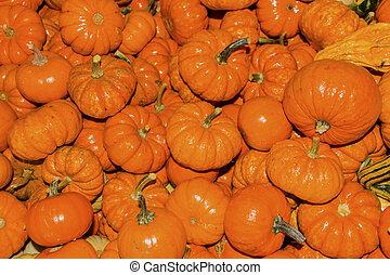 Small Orange Pumpkins Squash Cucurbita Pepo Squash