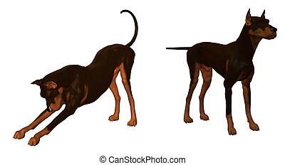 Doberman dog isolated on a white background