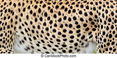Close-up skin of a cheetah - Close-up view of the real skin...