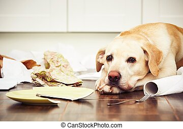 Naughty dog - Lying dog in the middle of mess in the...