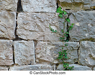 Texture of brick wall with big green plant Photo of texture...