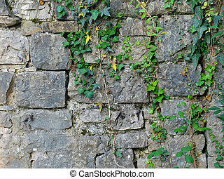 Texture of ruined brick wall with plants. Photo of texture.