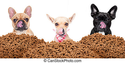group of dogs behind mound food - big row or group of hungry...