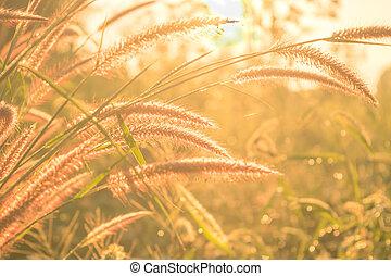 Flower grass on morning