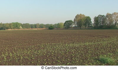 Spring, plowed field, it is the young shoots of plants -...