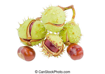 Several horse chestnuts on a light background - Branch with...