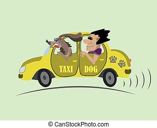 cheerful taxi and chauffeur dog - Dog taxi driver to take...