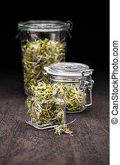 Sprouts - Mix of different sprouts in glass jars