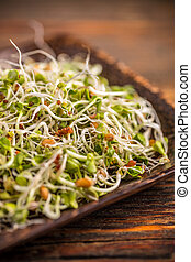 Fresh sprouts in bamboo plate