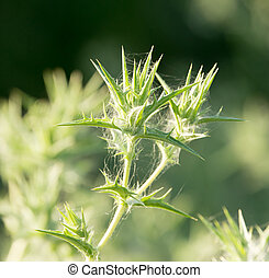 prickly plant in nature