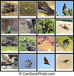 The fauna of Sri Lanka