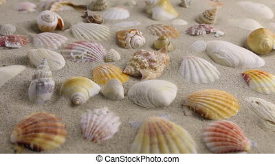 Wind blowing on the sand and opening seashells , top view