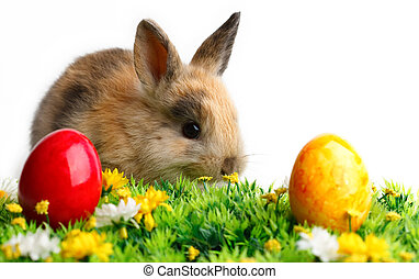 Easter Bunny - A bunny with easter eggs isolated on white...