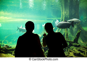 Couple at the oceanarium - Silhouette of couple watching...