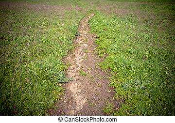 Foot path - moody image of foot path vanishing into the...