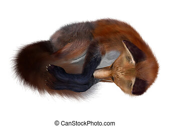 Red Fox Sleeping - 3D digital render of a red fox sleeping...