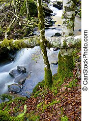 Creek - silky stream in a forest. Valley of Aspe, Pyrenees,...