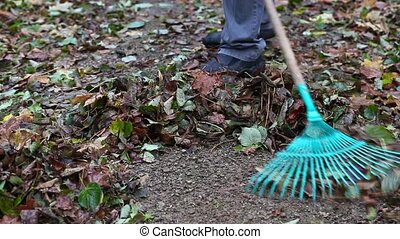 Worker use rake in the park in autumn