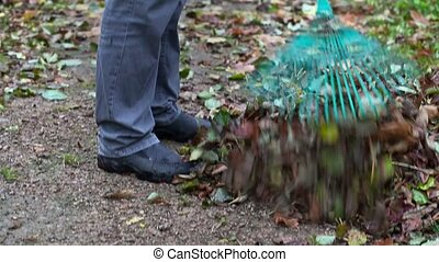 Worker collect leaves in the park with a rake