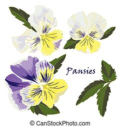 Set of flowers pansies with leafs in realistic hand-drawn...