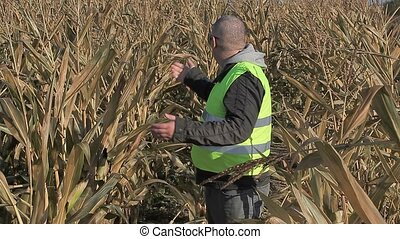 Anxious farmer on cold corn field in autumn
