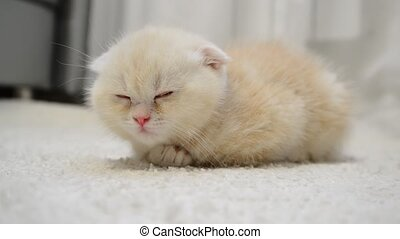Ginger kitten sleeping on  carpet
