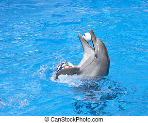 Dancing dolphin with balls at pool