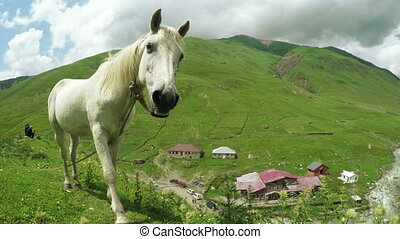 White horse on hill - Against background of Svan village in...