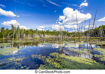Beaver Pond - Haliburton, Ontario - Beaver Pond in Late...
