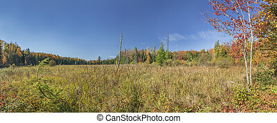Beaver Meadow in Autumn - Panorama of a Beaver Meadow in...
