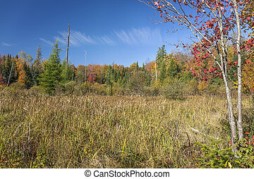 Beaver Meadow in Autumn - Haliburton, Ontario, Canada
