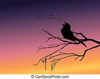 fundo, silueta, cantando, pássaro