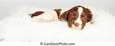 Dog Sleeping On Fur Over White Background