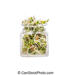 Sprouts - Mix of various sprouts in glass jar