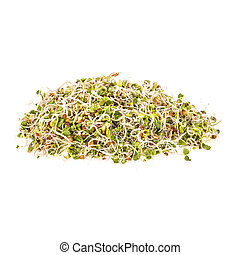 Sprouts - Mix of green young sprouts isolated on white...