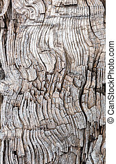 Old weathered wood. Background or texture
