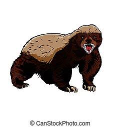 Honey badger illustration color vector