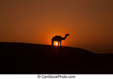 Camel silhouette - Desert landscape with camel at sunset