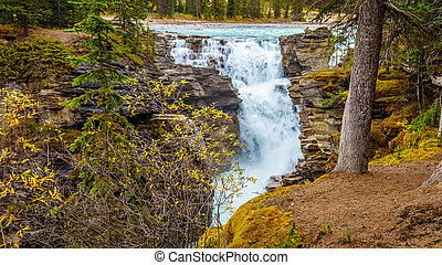 Athabasca Falls in Jasper National Park in the Canadian...