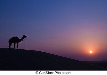 Camel and landscape