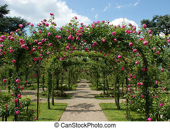 pergola in a french garden - roses pergola in a french...