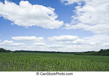 Green grass and blue sky - Nature. Green grass and blue sky