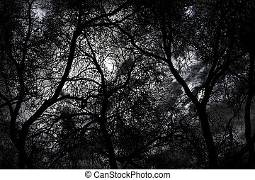 Mystery forest at night