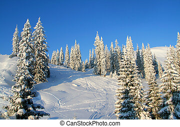 Snowcapped pines in winter mountains