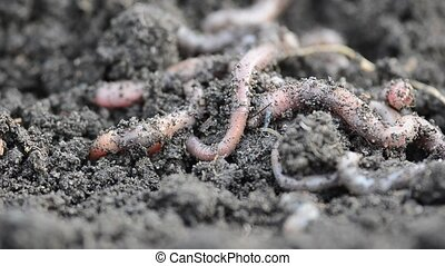 bunch of crawling worms closeup.