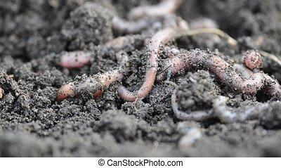 bunch of crawling worms closeup.