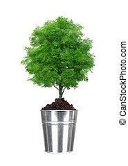 balde, árvore,  metal, isolado, verde, pequeno, branca