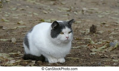 white gray cat sits on dry grass close up cold autumn